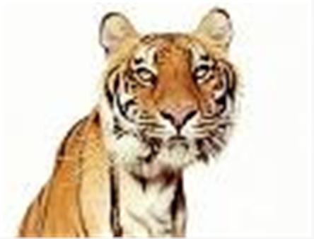 Happy Anniversary Tiger