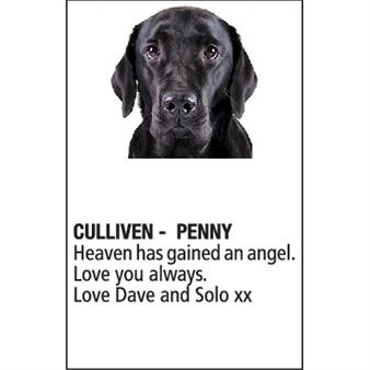 PENNY CULLIVEN